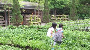 小廚師戶外夏令營 -  健康小食農料理課