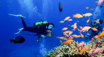 墾丁潛水體驗趣 - 探索海洋新世界