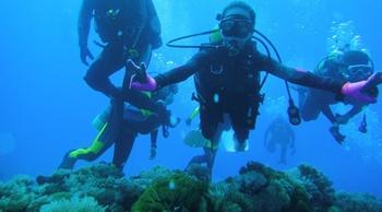東北角潛水,發現多莉的海洋秘密花園!